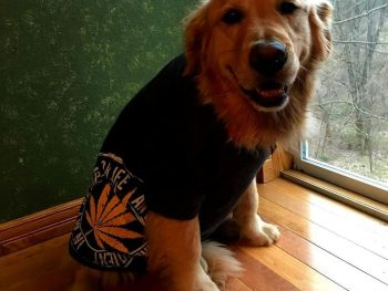 Sider the dog modeling the Original T-Shirt in Black